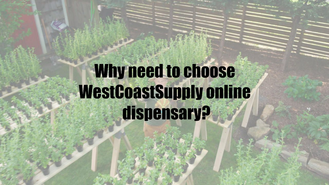 Why need to choose WestCoastSupply online dispensary?